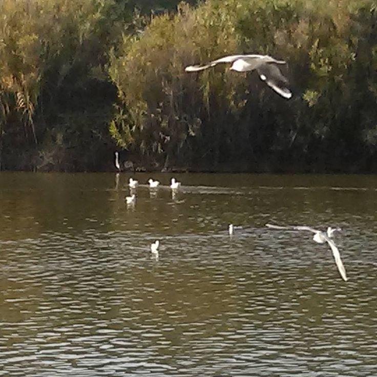Πάρκο Αντώνη Τρίτση