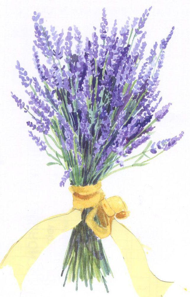 Lavender Bouquet Watercolors Lavender Bouquet