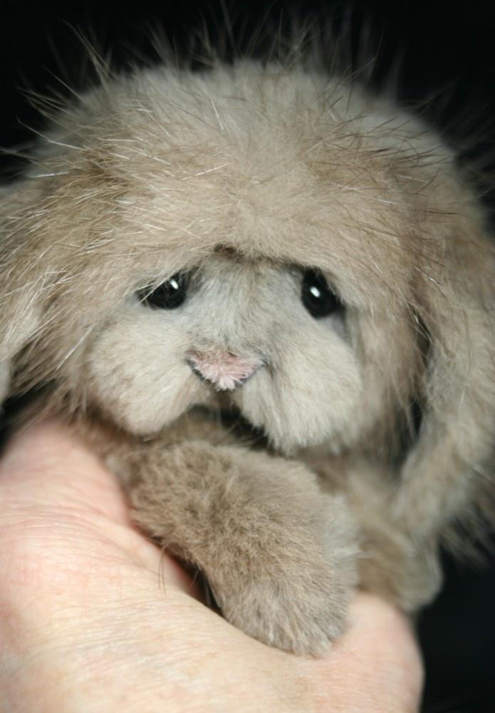 Pin by Sue Reid on * Teddy Bears To Love * | Pinterest