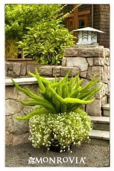 South Texas Landscaping on Pinterest | Texas Landscaping, Drought ...