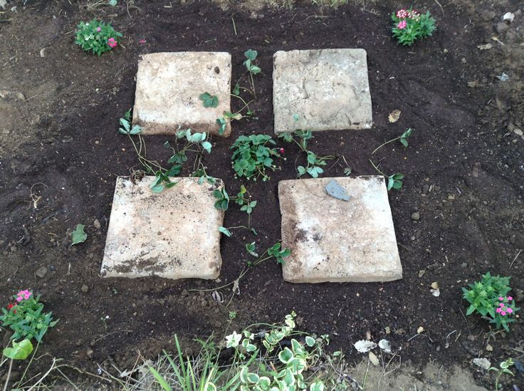 Anyone for strawberries and cream? I have planted a pink strawberry in the centre. And have planted some white flowering strawberries between the four paving stones. And topped with four pink and red verbenas in the corners