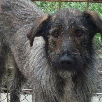 Shana | Hundar Söker Hem