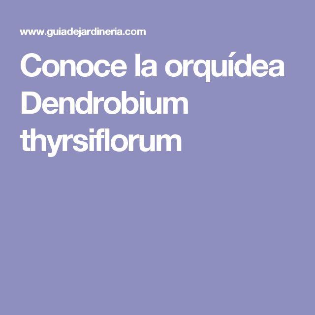 Conoce la orquídea Dendrobium thyrsiflorum
