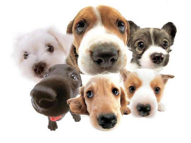 ¿Cuál es tu perro ideal? Test para descubrirlo
