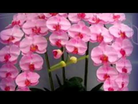 Вот как зацветет орхидея после 1 трюка #mosshow - YouTube