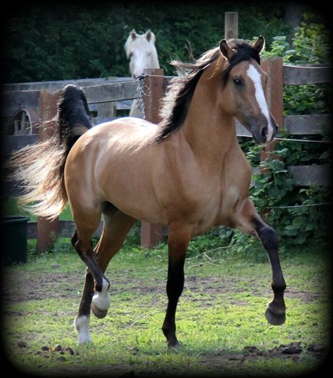 17 Best Images About Equine Obsession/mania On Pinterest