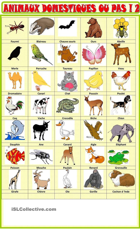 Populaire Les 25 meilleures idées de la catégorie Les animaux domestiques  AF55