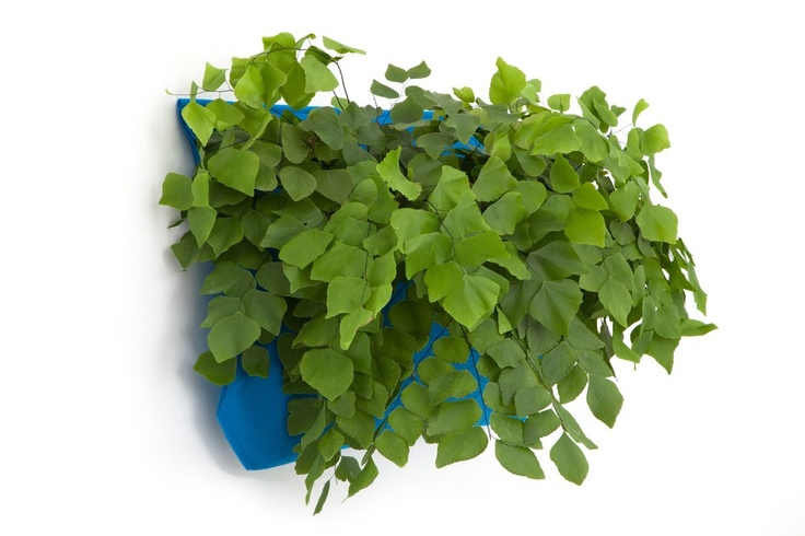 wall pocket planters.. would be great to fill with herbs and hang near a sunny window in the kitchen.