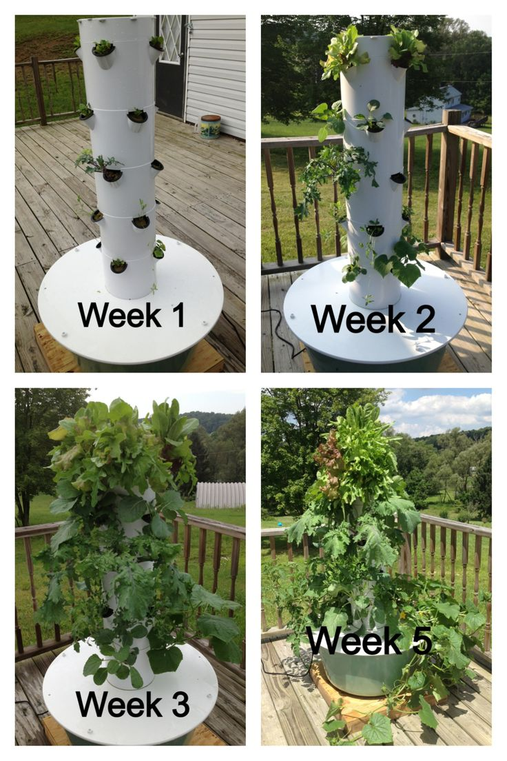 Look At What You Could Be Growing In Your Very Own Aeroponic Tower Garden!