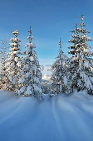 Winterlandschaft an einem sonnigen Tag mit Kiefern im Schnee Wald in einem Bergtal Karpaten, Ukraine, Europa