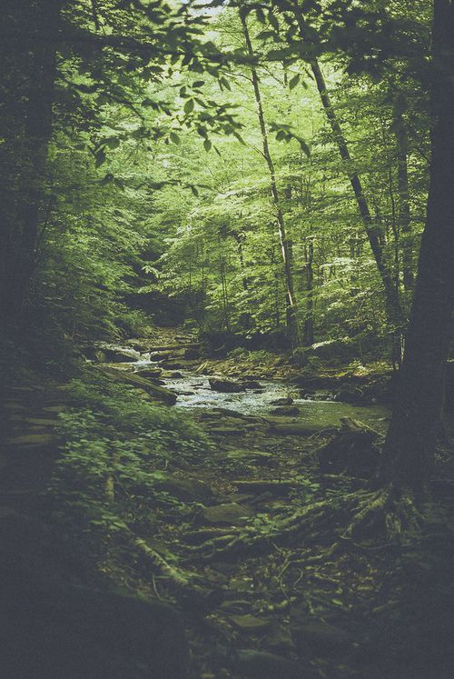 // Forest hike