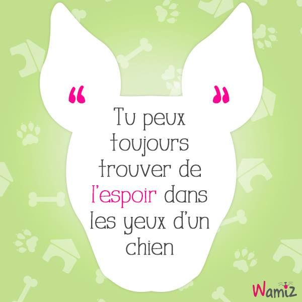 Tu peux toujours trouver de l'espoir dans les yeux d'un chien ------- You can always find hope in the eyes of a dog