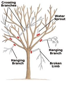 How to Prune Your Trees and Shrubs by lowes: Pruning is necessary to promote good plant health, remove damaged limbs, promote new growth and maintain shape. #Trees #Shrubs #Pruning