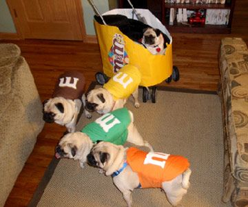 It makes me sad when I see pets all dressed up... because I just know that they must be miserable. But my pugs WILL be M for Halloween! :D