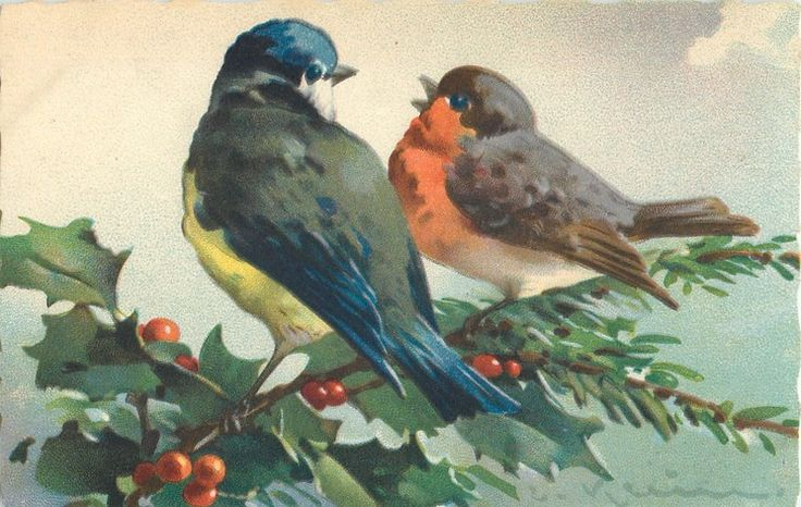 Red breasted robin & blue bird on holly branch ~ Catherine Klein