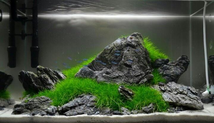 Simplicity is best aquarium ideas pinterest for Aquarium 50l