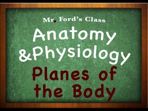 7 best Anatomy videos images on Pinterest | Learning, School and ...