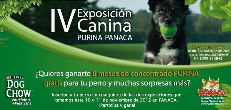 Recuerda que el sábado 10 y domingo 11 de Noviembre llega la IV Exposición Canina, inscribe a tu mascota por sólo $12.000 y podrás ganarte el alimento para tu perro durante 6 meses.