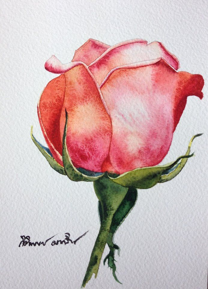39 best roses watercolor paintings images on pinterest for How to paint a rose in watercolour