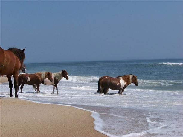 Ocean City, Maryland. Went there as a kid and seen the wild horses. Was one of my best childhood vacations.