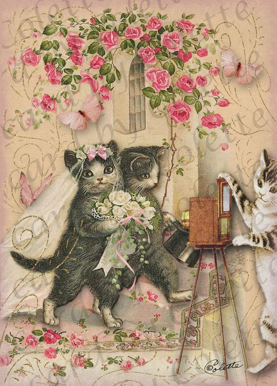 14 best images about cat photos on pinterest valentine
