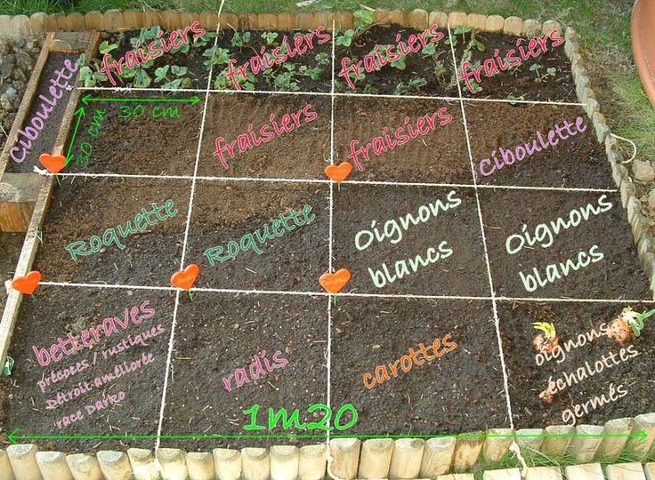 Cette année j'ai décidé de réitérer l'expérience du potager en carré, avec plus de soin, de minutie et de variété.Pour démarrer, exit le...