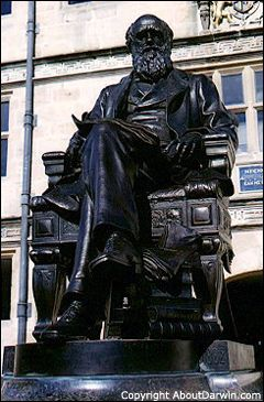 Statue - Charles Darwin