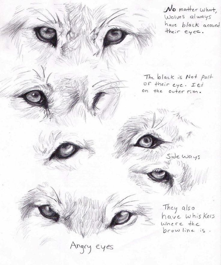 Wolf eyes by ~AdothWolf on deviantART ★ || CHARACTER DESIGN REFERENCES | キャラクターデザイン