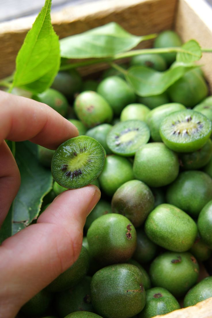COCKTAIL KWIS: Super-sweet mini kiwis, with fuzz free edible skin & hardy down to -35C.
