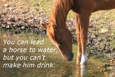 You can lead a horse to water....Visit www.equinespot.com for more equine inspired fun!