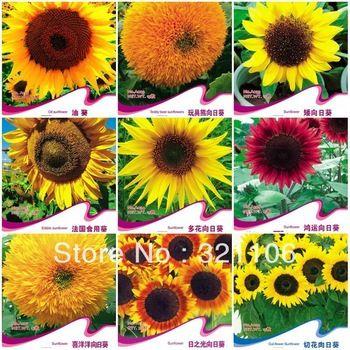 types of sunflowers | 10 different varieties of Sunflower seeds bonsai flowers four seasons ...