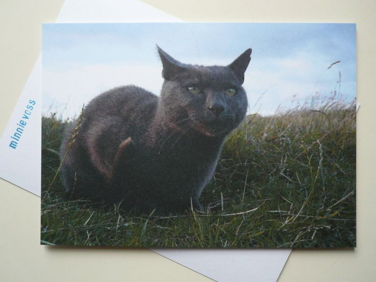 grauer Kater, postcard by minnievoss; find me on etsy!