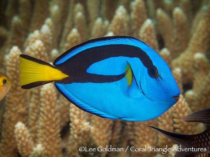 1413 Best Images About Fish And Tanks On Pinterest