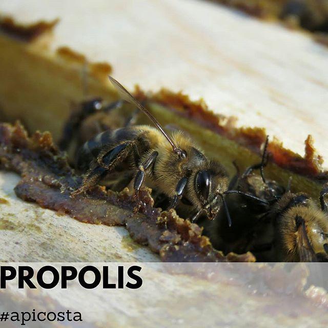 #apiculturanatural #apiculturaeficiente #apicultura #abelhas #colmeias #cera #mel #agricultura #propolis  #Regram via @apicosta