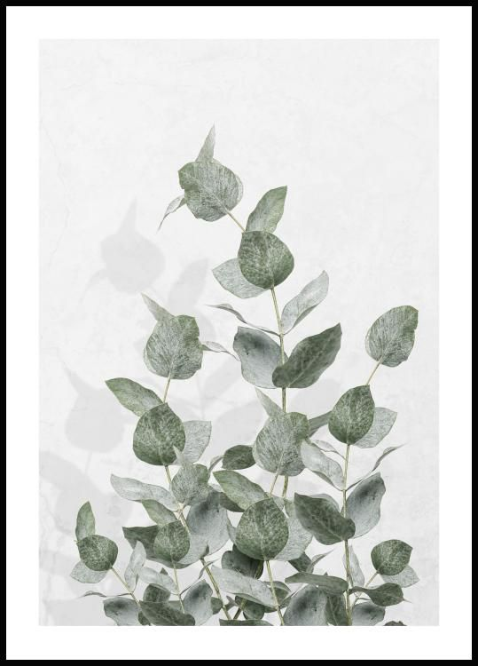 eucalyptus poster, akvarell målning, naturtavla
