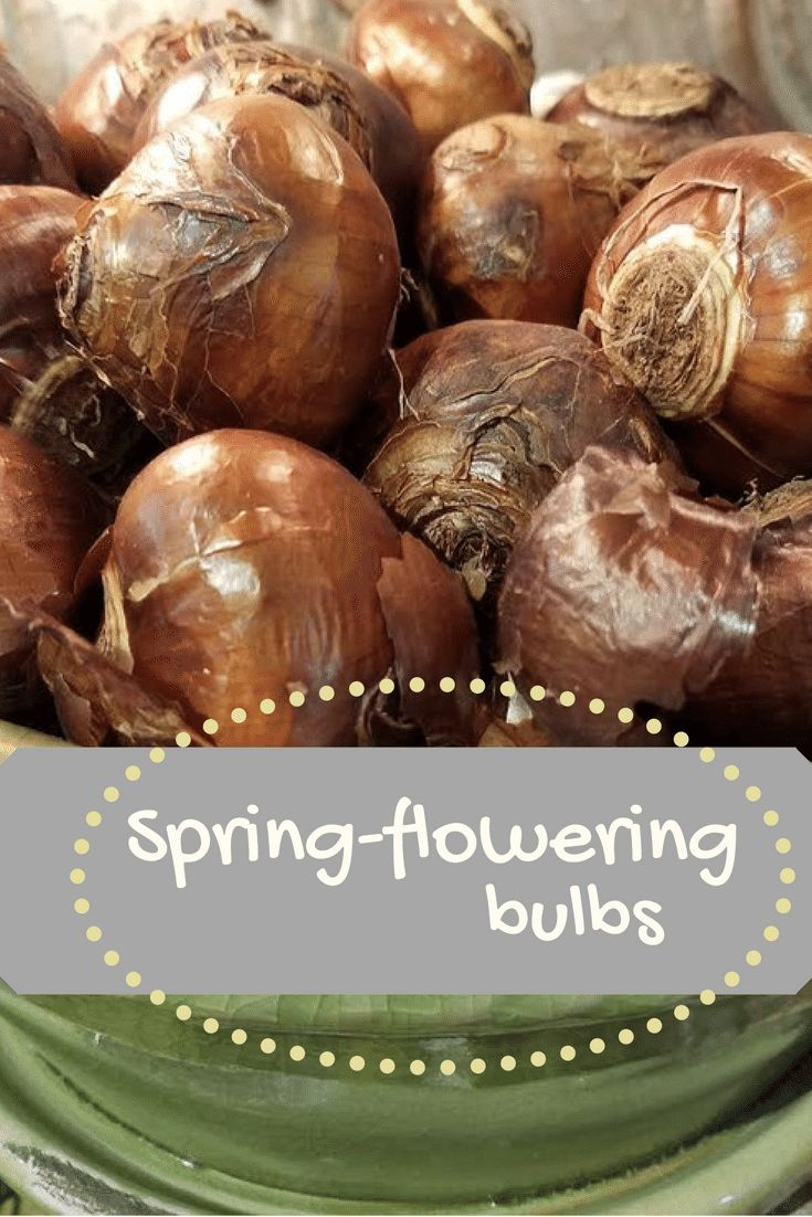 Now is the time! Everything you need to know about spring-flowering bulbs.
