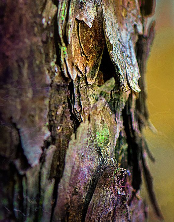 Tree Bark Macro Photography enchanting green violet red gold fine art photography nature surreal iridescent sparkly rustic macro
