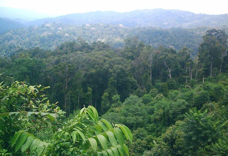 Pengertian Hutan Hujan Tropis  Hutan hujan tropis atau yang juga dikenal sebagai hutan basah biasanya terdapat di daerah tropika. Daerah ini meliputi semenanjung Amerika Tengah dan Selatan, Madagaskar, Afrika, Malaysia, Indonesia dan Australia Bagian Utara. Terdapat beraneka jenis tumbuhan yang dapat hidup di hutan ini. Hal ini dikarenakan hutan hujan tropis selalu cukup mendapat sinar matahari dan juga curah hujan yang tinggi.