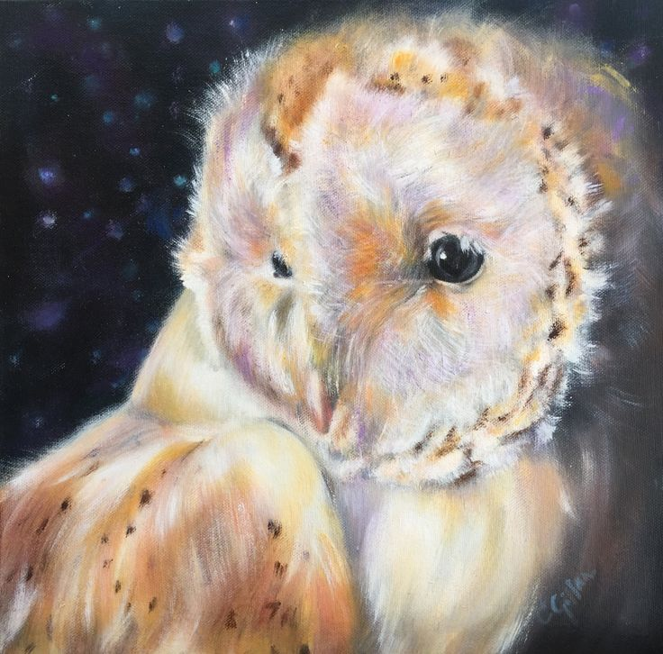 "Owl Original Oil Painting Barn Owl Study Canvas Board Unframed 12 x 12"" by CarolGillanFineArt on Etsy"