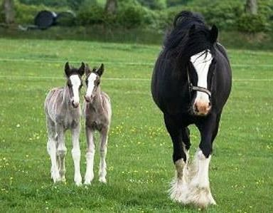 Mare With Her Two Young Twin Foals.