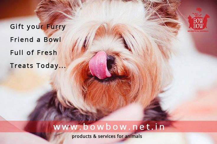 Buy the best products for you pets from the biggest Made In India products for animals marketplace www.bowbow.net.in  #bowbow #lovepets #pets #petlove #animallove #makeinindia #loveanimals #petservices #animalproducts #petlovers #petowners #happypets #petportal #petlove #doglove #cutedogs #cutecats #petproducts