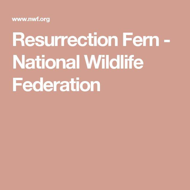 Resurrection Fern - National Wildlife Federation