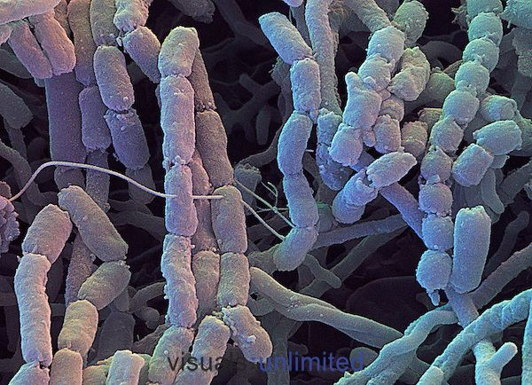 155 best soil microbiology images on pinterest for What substances are in soil