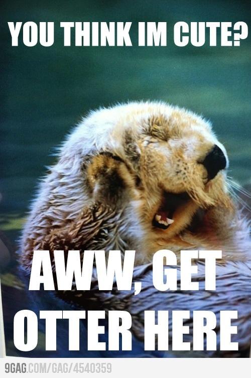 haha awwwww: Giggle, Animals, Stuff, So Cute, Otters, Funny Animal, Funnie