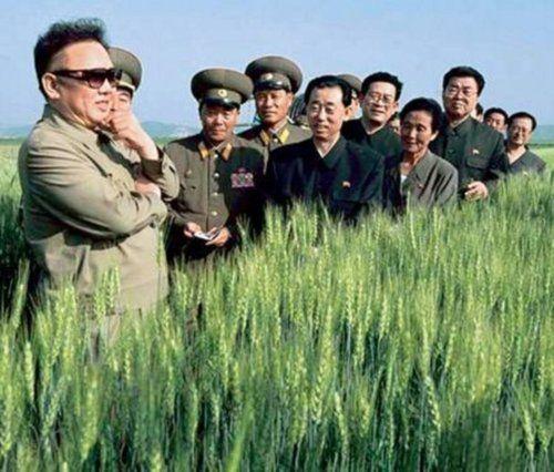 weird vegetables: Kim Jong-Il's Veggie Fascination