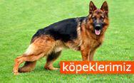 Köpeklerimiz http://www.almankurdu.com/