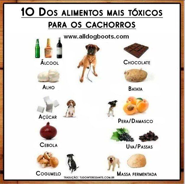 10 alimentos mais tóxicos para cachorro