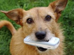 Bark? Sing? Your pet on your ringtone set to your favorite musical genre.