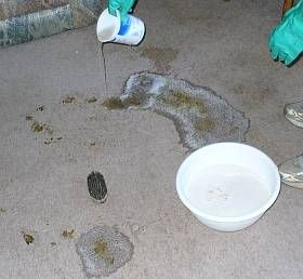Inexpensive recipe for a pet odor carpet cleaner that takes care of pet stains and that cat or dog urine smell.