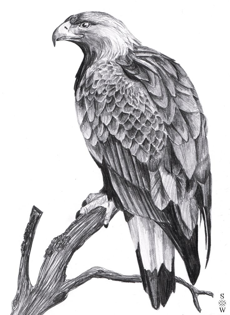 картинки эскизы тату орла верить